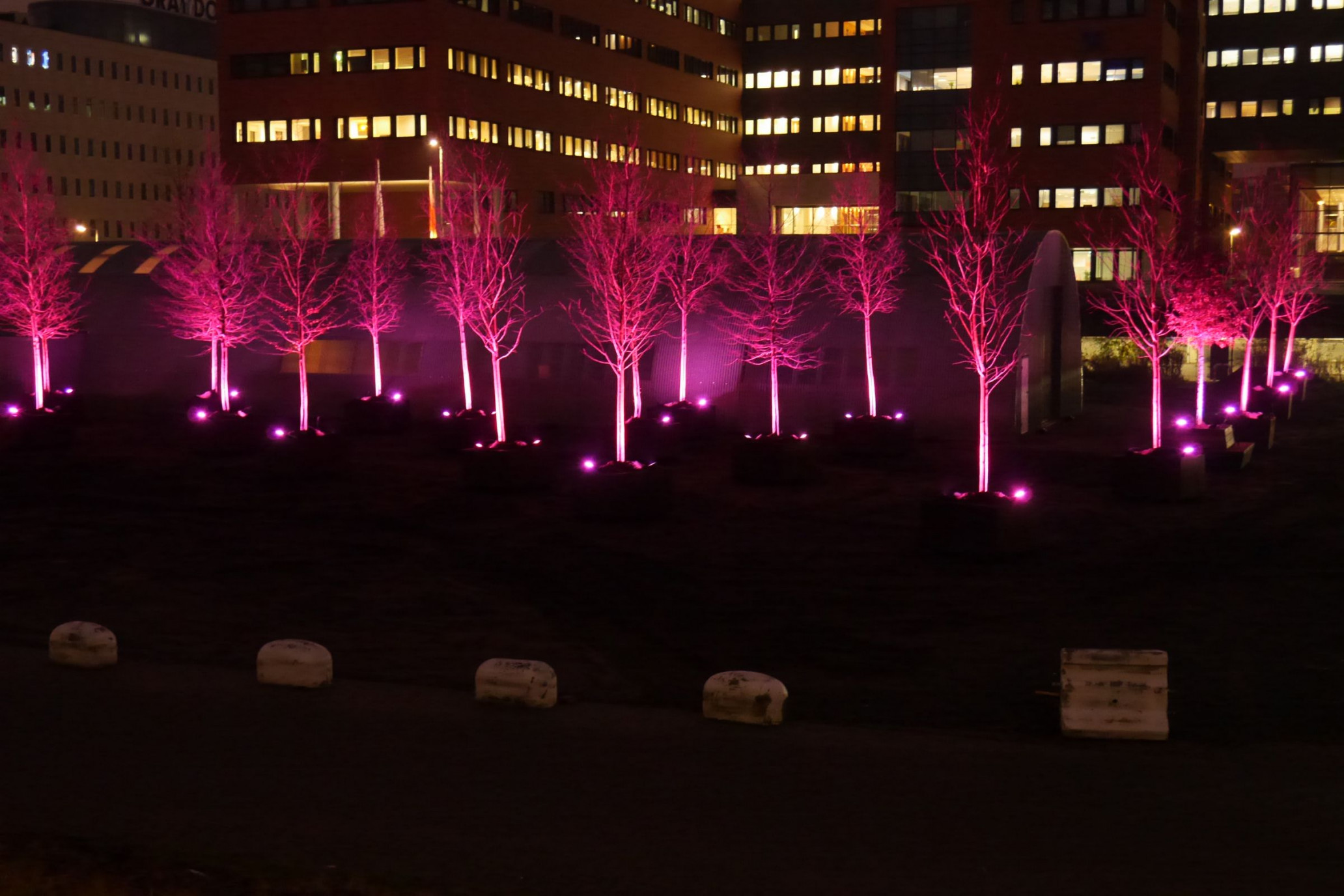 Amsterdam, NL: Project 'Luminous trees'