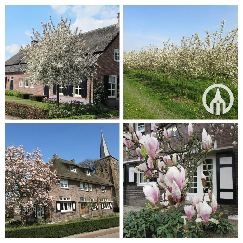 malus evereste hoofd foto-COLLAGE